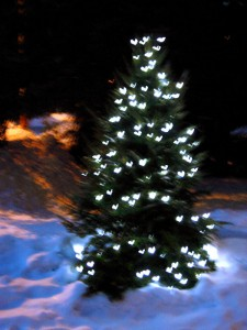 Christmas, Things They Forgot to Mention, blog, photo, yule, yuletide, tree
