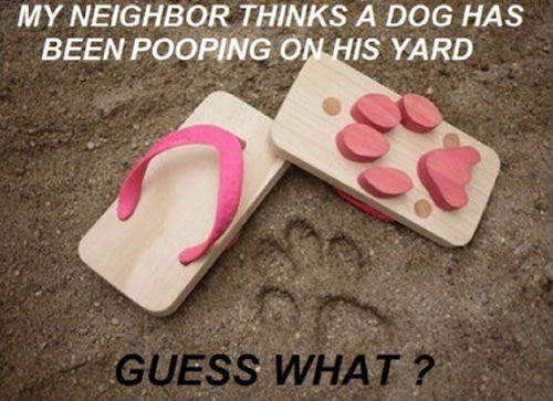 Things They Forgot to Mention, blog, secret, secrets, postsecret, dog poop